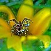 Spider Dew Flower Reflect Poster