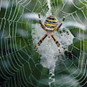 Spider On Its Web Poster