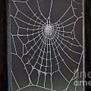 Spider Web With Frost Poster
