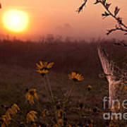 Spiderweb And Wildflowers Lit By Morning Sunrise Poster