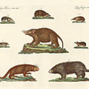 Spiny Animals Poster