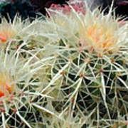 Spiny Barrel Cactus Poster