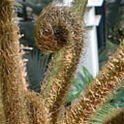 Spiral Plant Poster
