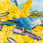 Spix's Macaw - A Dream Of Home Poster