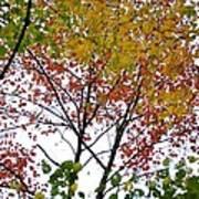 Splash Of Autumn Colors Poster