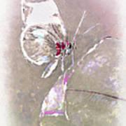 Splatter Poster by Jill Balsam