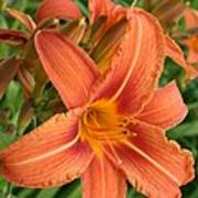 Splendid Day Lily Poster