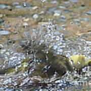 Splish Splash Bird Bath Poster