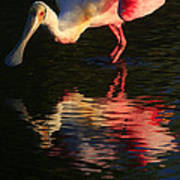 Spoonbill Island Reflection Poster