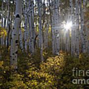 Spot Of Sun Poster by Jeff Kolker