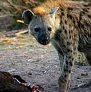 Spotted Hyena Poster