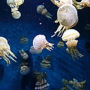 Spotted Jelly Fish 5d24951 Poster