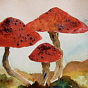 Spotted Mushrooms Poster