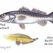 Spotted Seatrout And Rattlin' Minnow Fly Poster