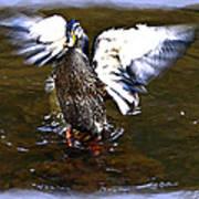 Spread Your Wings Poster by Susan Leggett
