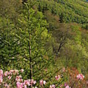 Spring Along The Blue Ridge Poster