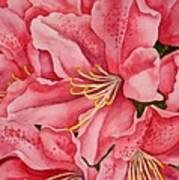 Spring Azalea Poster