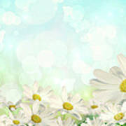 Spring Background With Daisies Poster by Sandra Cunningham