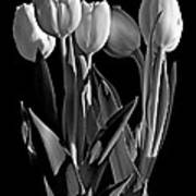 Spring Beauties Bw Poster
