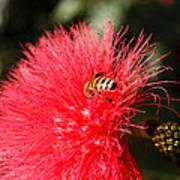 Spring Bee Sweet As Honey Poster