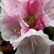 Spring Bells Poster