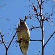 Spring Bird Singing Poster