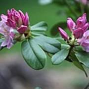 Spring Bloom Poster