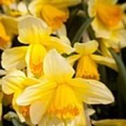 Spring Blooms 6739 Poster