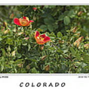 Spring Blooms In Colorado Poster