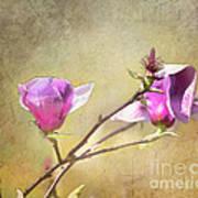 Spring Blossoms - Digital Sketch Poster