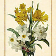 Spring Bouquet Of Daffodils And Narcissus With Butterfly Vertical Poster
