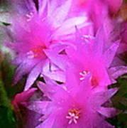 Spring Cactus Poster