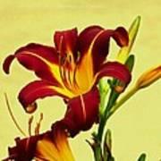 Spring Candor Poster