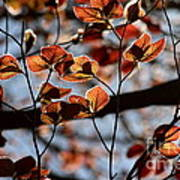 Spring Canopy Poster