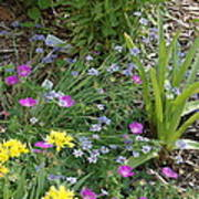 Spring Cottage Garden Poster