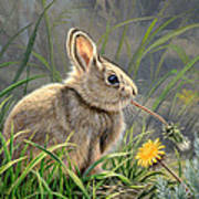 Spring Cottontail Poster