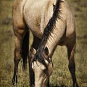 Spring Creek Basin Wild Horse Grazing Poster