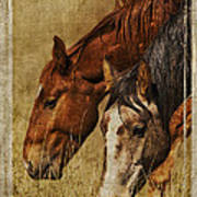 Spring Creek Basin Wild Horses Poster