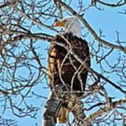 Spring Eagle Poster