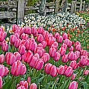 Spring Fence Landscape Art Prints Poster