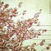 Spring Floral Poster