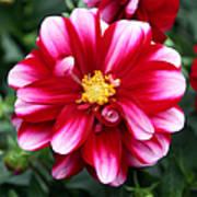 Spring Flower 1 Poster