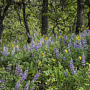 Spring Flowers In The Columbia Gorge Poster