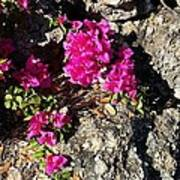 Spring From Rocks Poster