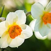 Spring Glow Poster
