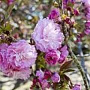 Spring Has Sprung Poster