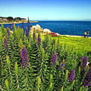 Spring In Pacific Grove Ca Two Poster