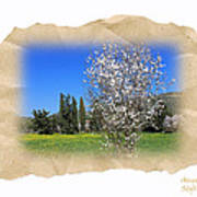 Spring In The Paper Poster