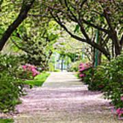 Spring In Washington Dc Poster