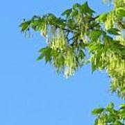 Spring Leaves And Sky Two Poster